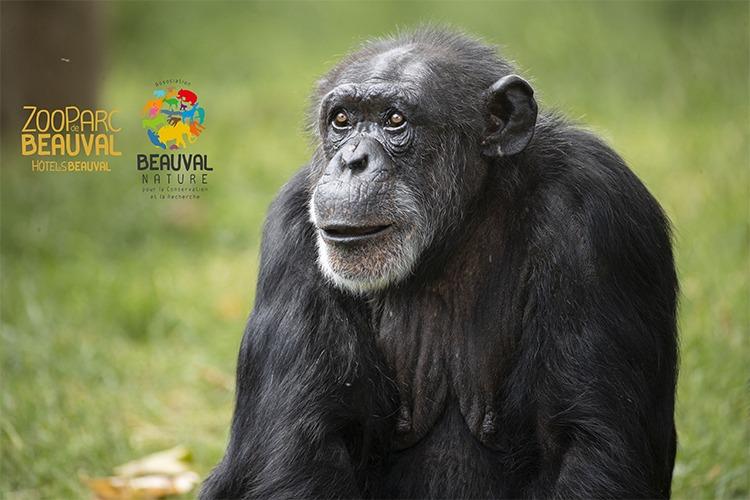 © ZooParc de Beauval