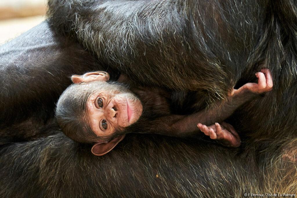 © F.Perroux - Zoo de La Palmyre