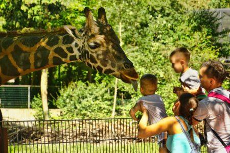 Réouvertures zoos