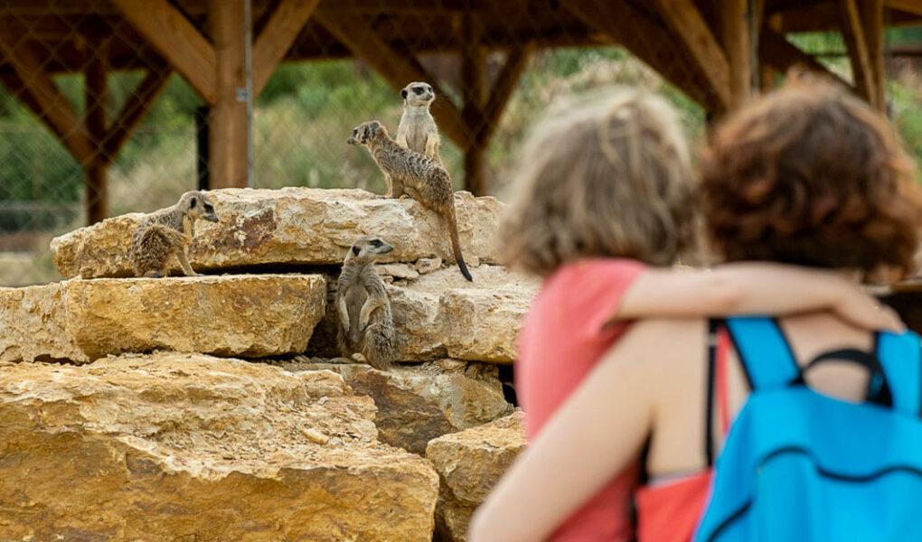 © Bioparc Zoo de Doué-la-Fontaine
