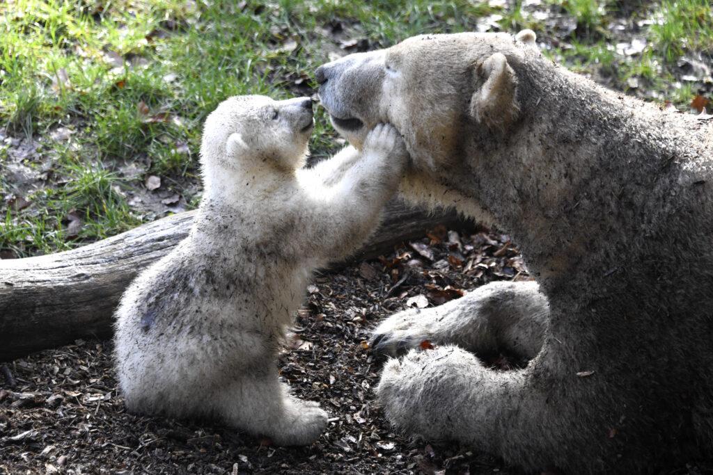 Kara Zoo de Mulhouse © Cathy Kohler
