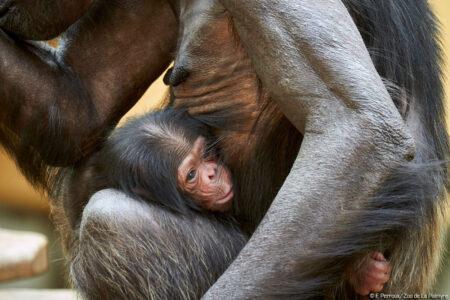 © F.Perroux / Zoo de la Palmyre