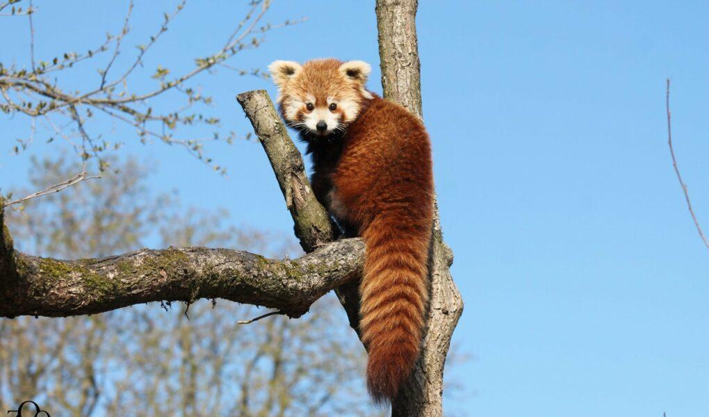 © Zoo d'Amiens