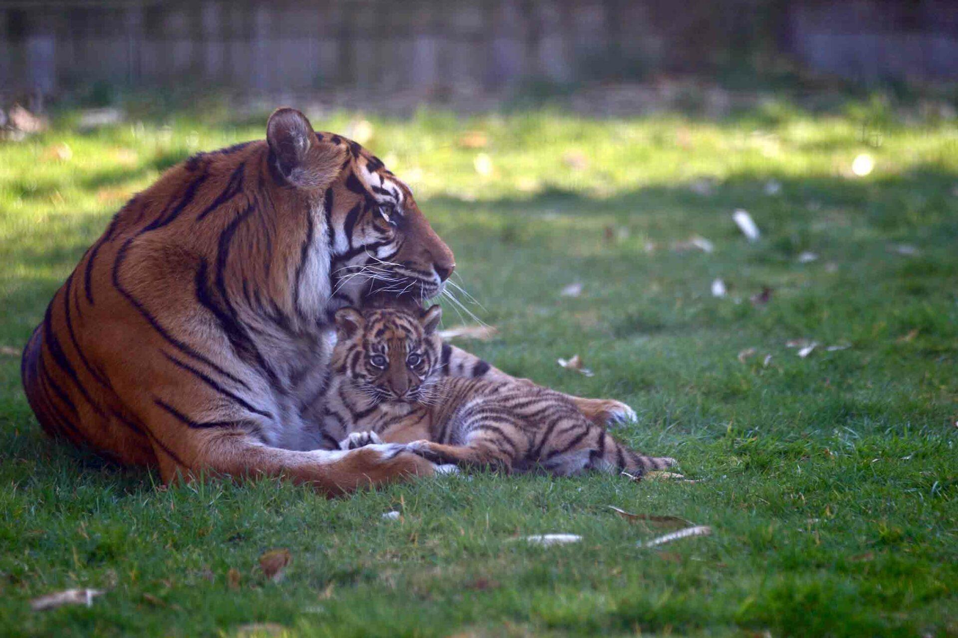 © Zoo de Champrépus