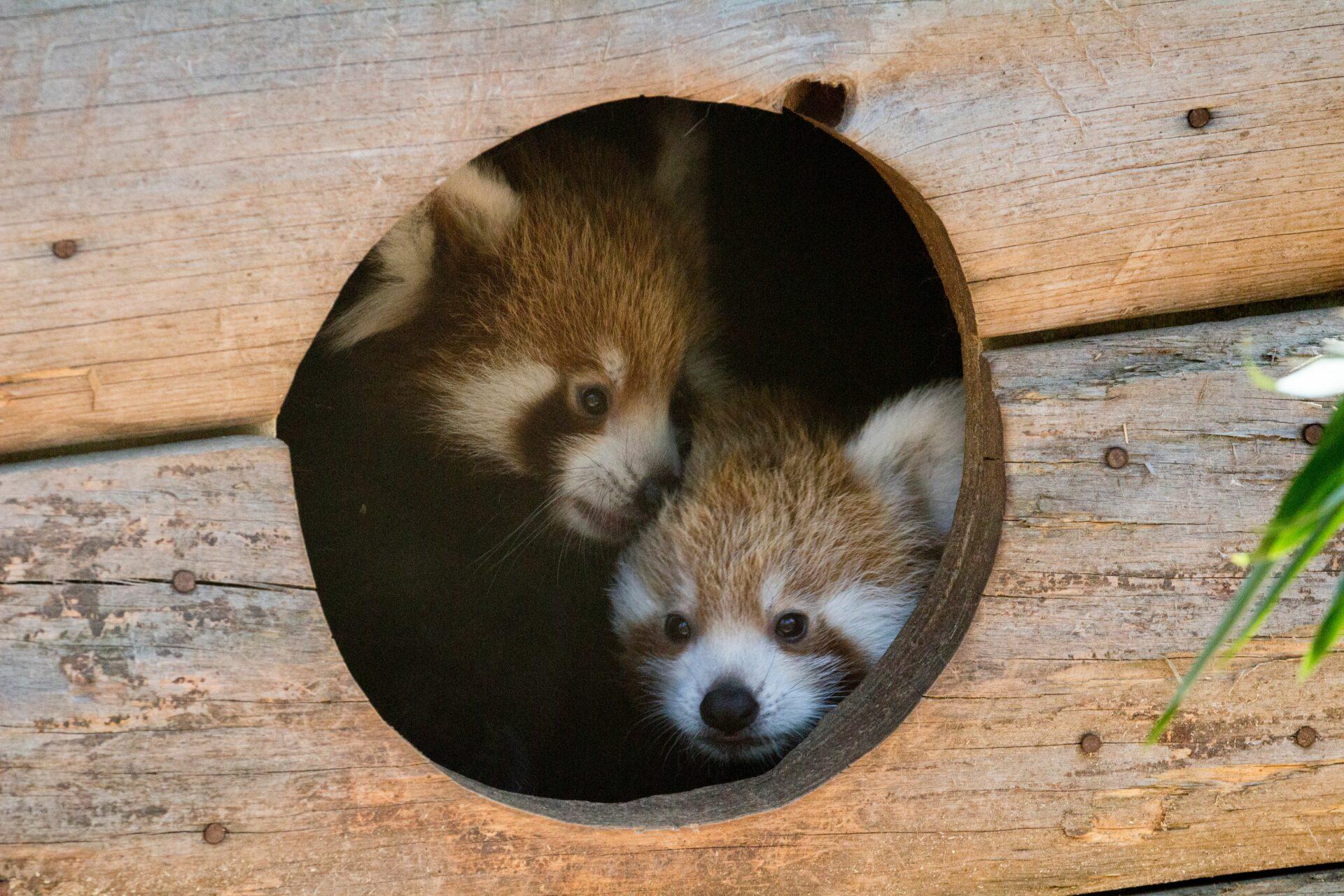 © Parc animalier d'Auvergne