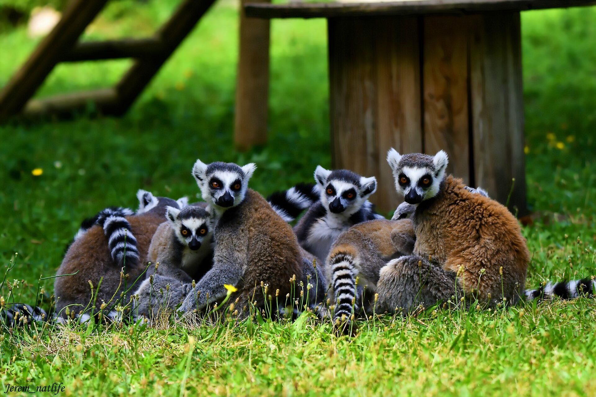 © Zoo d'Upie