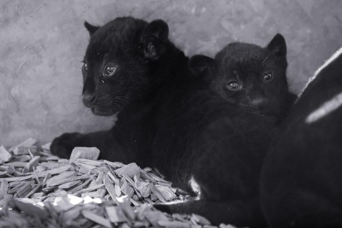 © Parcs Zoologiques de Lumigny