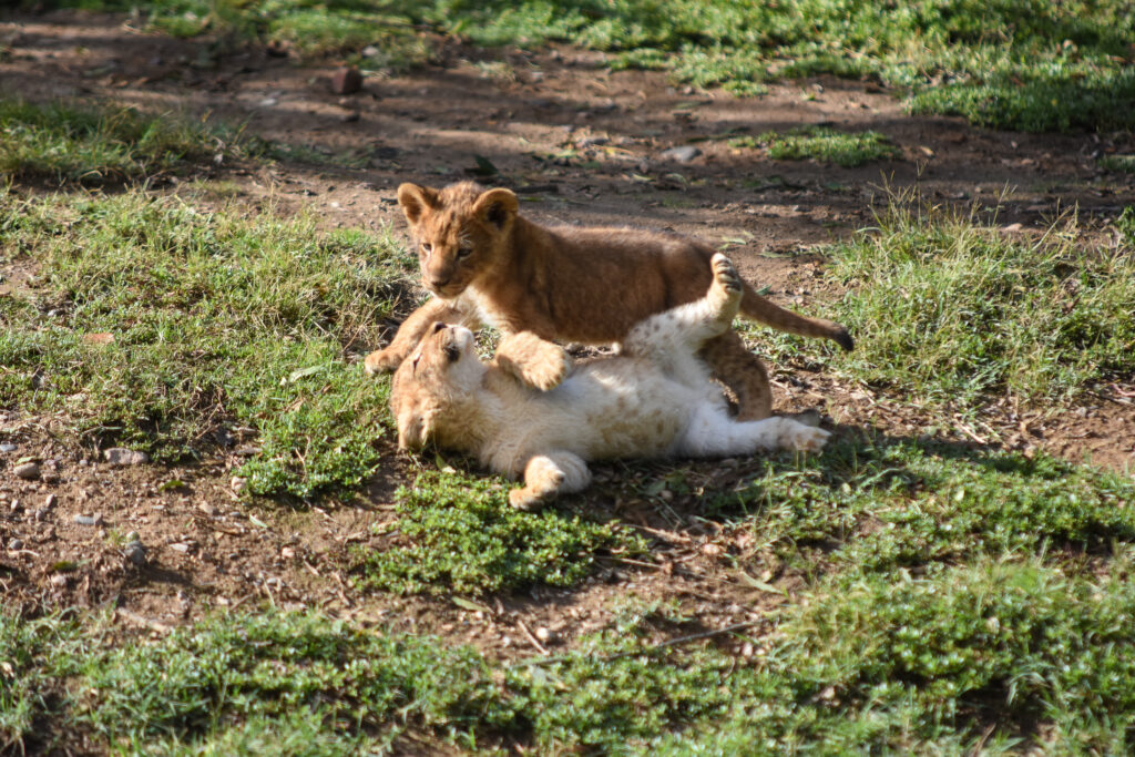 © Zoo African Safari
