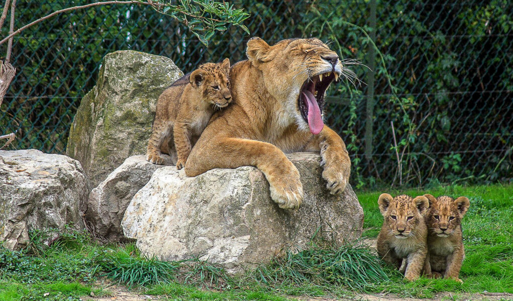 © M. Croissant / Zoo African Safari